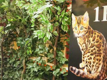 京都ヒョウ猫の森