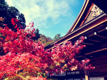 嵯峨 二尊院 美しい紅葉は一見の価値あり⭐