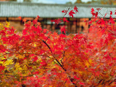 京都の紅葉名所 東福寺