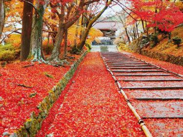 紅葉の絨毯 毘沙門堂門跡