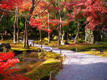 北山杉と紅葉 しょうざん庭園