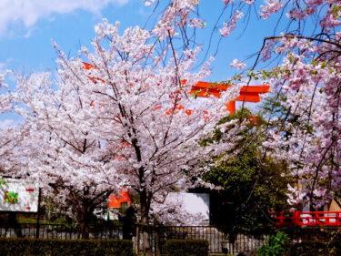 京都 桜・人気&穴場情報 2021年