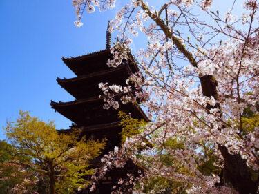 御室桜・桜の名所 世界遺産「仁和寺」