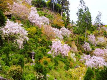 四季折々の花々を楽しむ 西京区「善峯寺」
