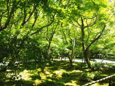 新緑の美しい静寂な寺院 左京区「圓光寺」